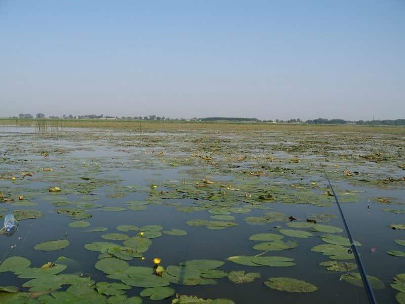 Великое озеро (Ярославская область)