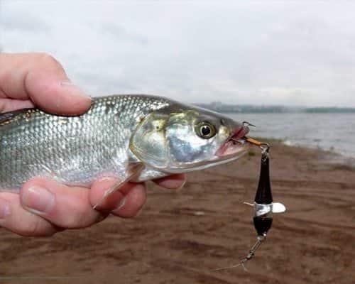 Девон — секрет удачной рыбалки