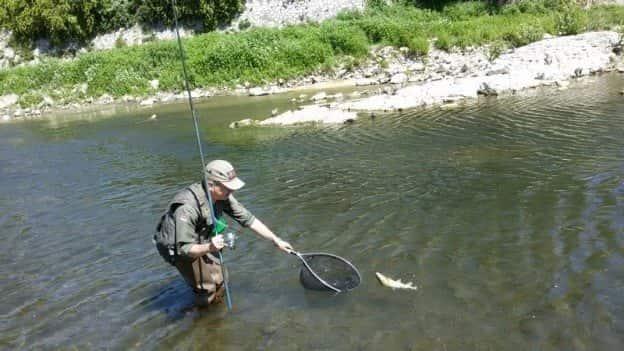 Болонская ловля