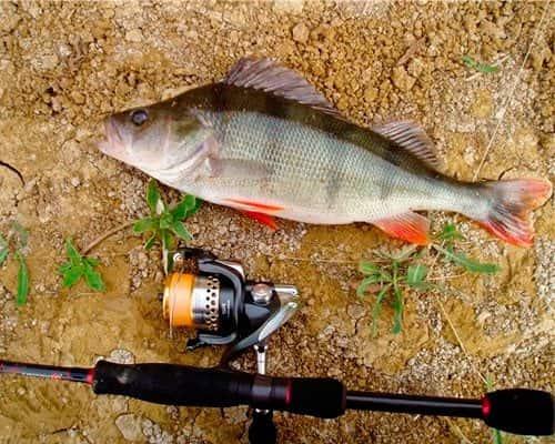 Спиннинг для микроджига рейтинг — Здесь рыба
