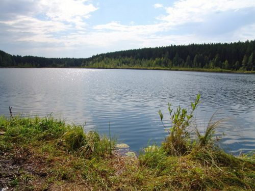 torsunovskoe
