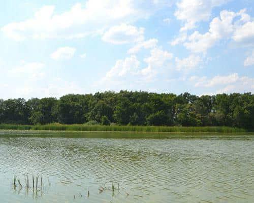 Белое озеро (Саратовская область)