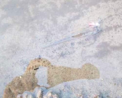 Где встречается рыба пескарь, особенности ее поведения и снасти для ловли - читайте на
