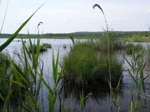 Чекалинское озеро