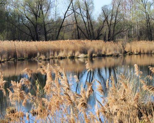 Чёрное озеро (Ульяновская область)