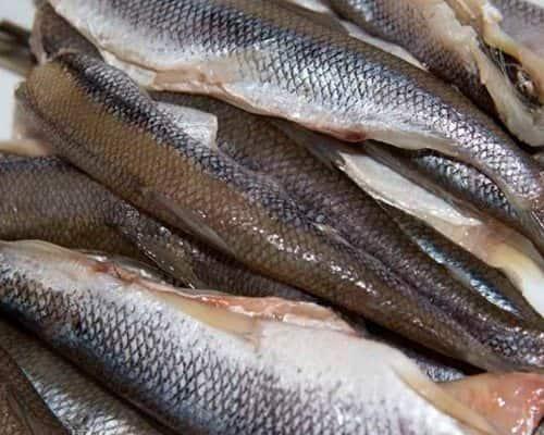 Зимняя рыбалка на корюшку – особенности поведения и выбор снастей