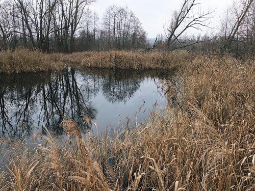 Кругляшка озеро