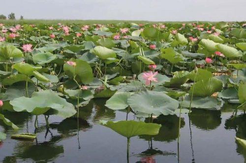 Озеро Лотосов