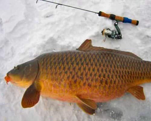Зимняя рыбалка: ловля сазана