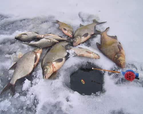 Прикормка леща зимой