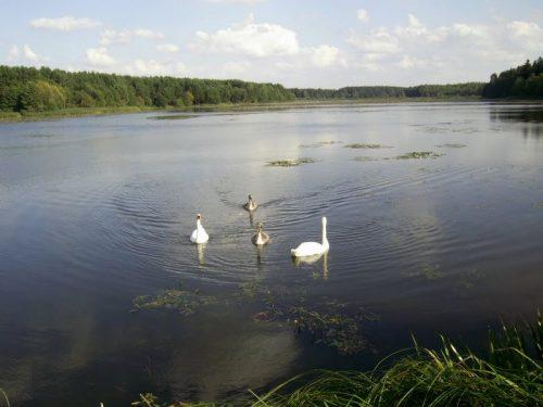 Васьковское озеро