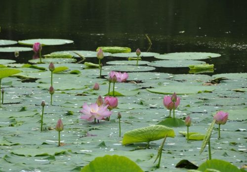 Цветочное озеро