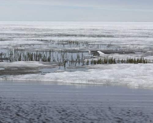 Озеро Нерпичье (Якутия)