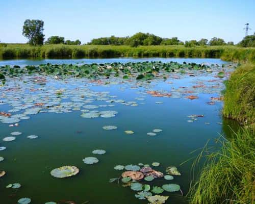 Осиновое озеро