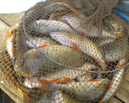 Рыбаков заставят регистрировать снасти в спецреестре