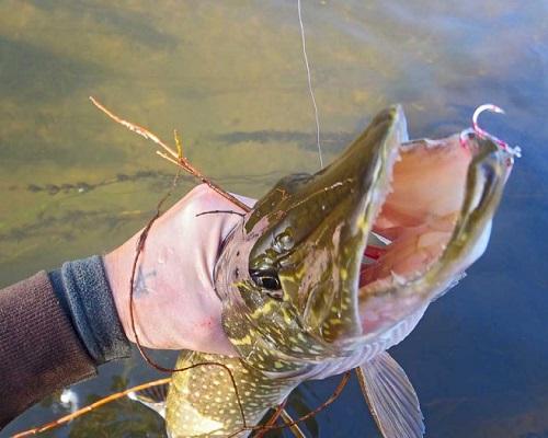 Ловля на мелководных участках озер и водохранилищ