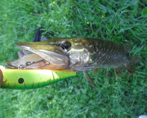 Ловля в мелководных заливах рек