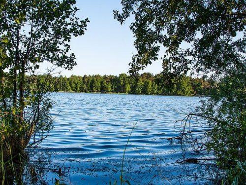 боровое озеро ногинский район фото двум картинкам