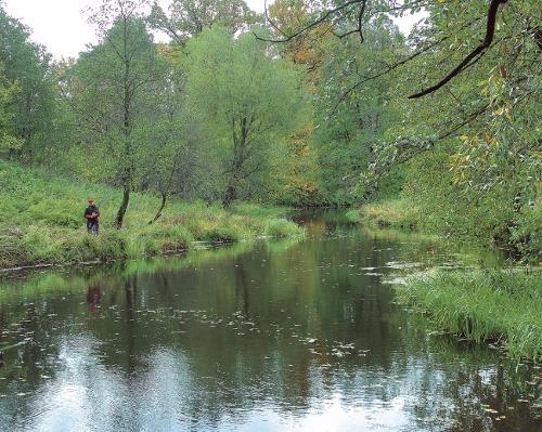 Плотва малых рек