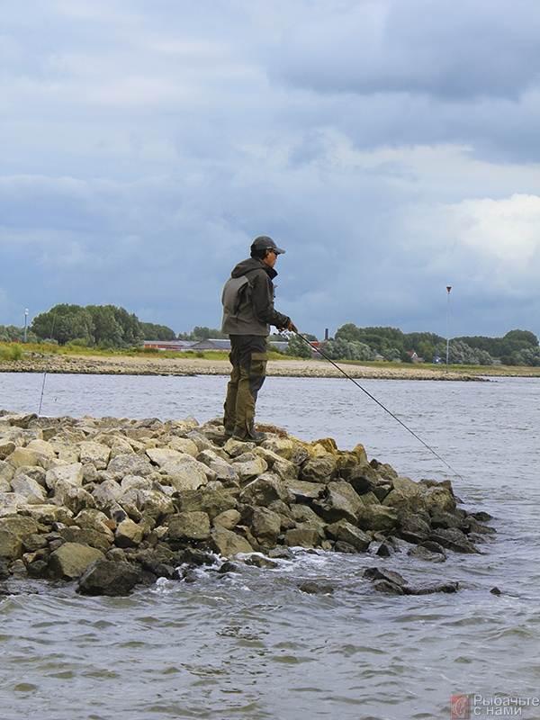 Джиговая ловля клыкастого на Рейне