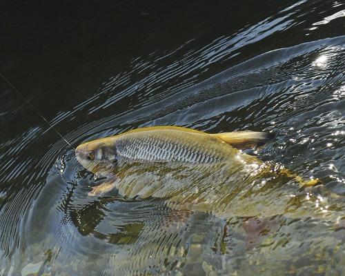 Ошеломляющие уловы