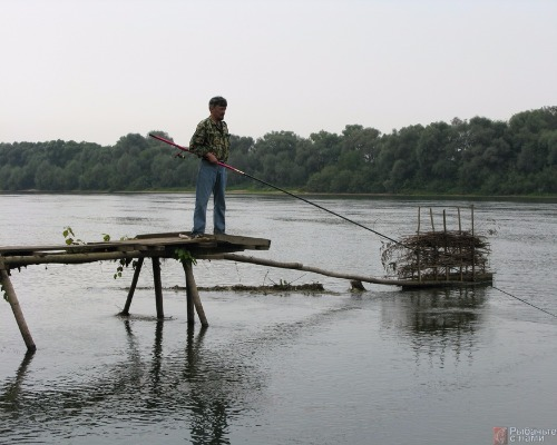 Болонская ловля язя на реках