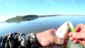 Видео отчеты по ловле судака