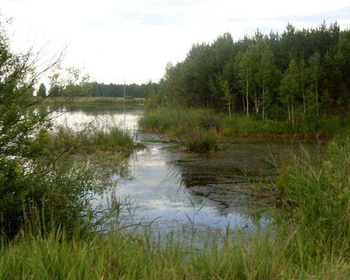 Боровое озеро (Челябинская область)