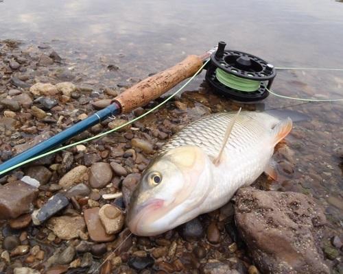 Ловля голавля в реках нижнего Дона: Сухой Донец