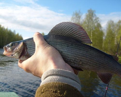 Один день на рыбалке
