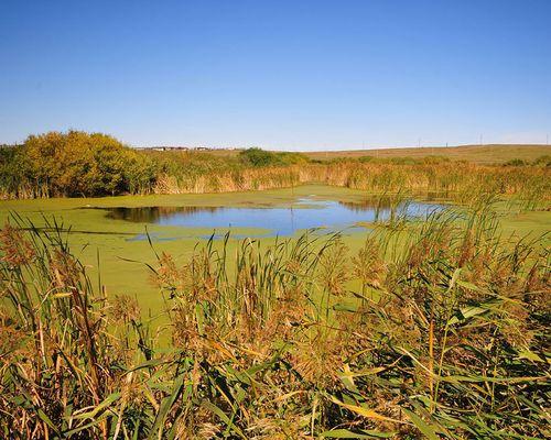 Кривое озеро (Челябинская область)