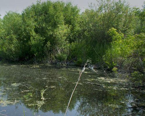 Бигарды озеро