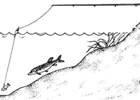 Ловля щуки на поплавочную удочку