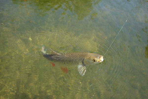 Рыбалка, Виды рыб, Места ловли, Приманки, Рыболовные снасти, Способы ловли, Статьи о рыбалке