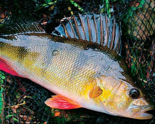 Календарь рыболова — Октябрь 2017