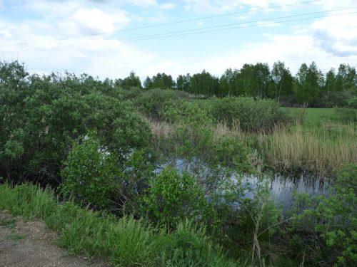Киржакуль озеро
