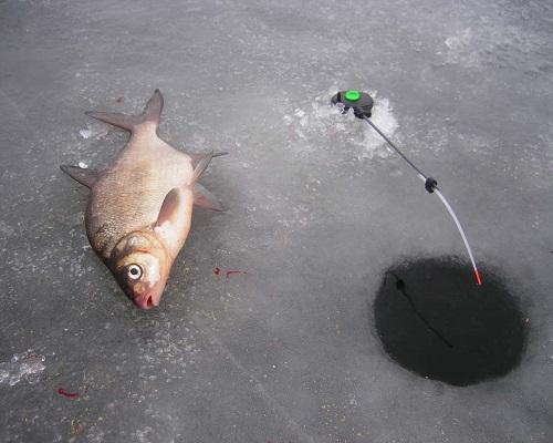 Ловля леща зимой - читайте на Сatcher.fish