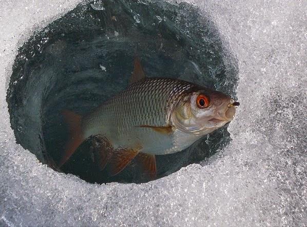 Рыбалка зимой на сорогу