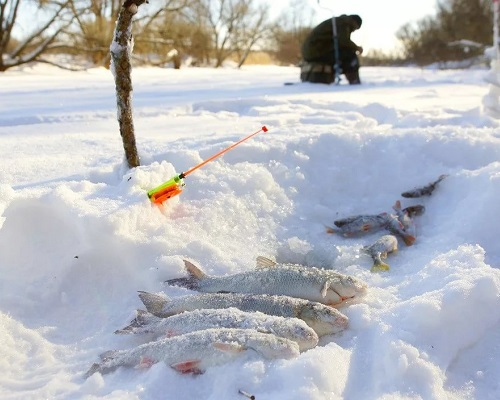 Ловля язя зимой — секреты зимней подледной ловли крупной рыбы