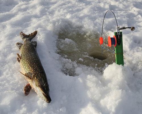 Ловля зимой на жерлицы: установка жерлиц для ловли щуки