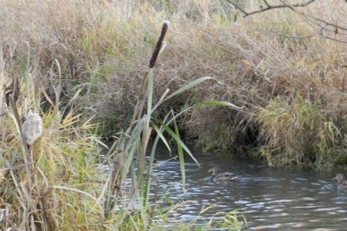 Метлинский пруд