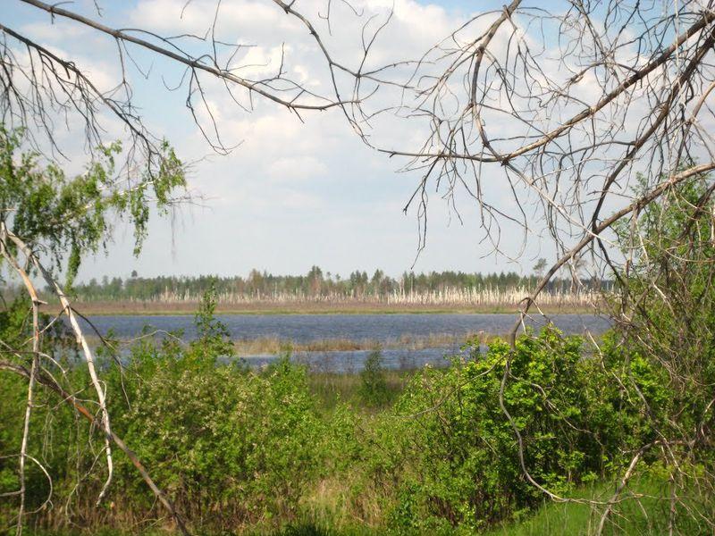Мутное озеро (Челябинская область)