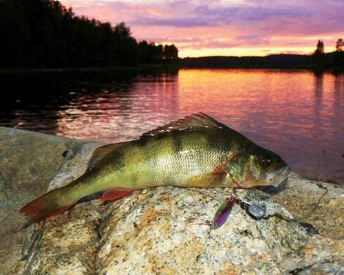 Ночная рыбалка: ловля рыбы на утренней и ночной зорьке