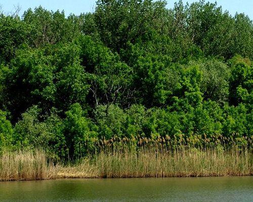 Островное озеро
