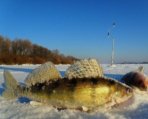 Рыбалка на судака зимой: ловля судака в феврале блеснением