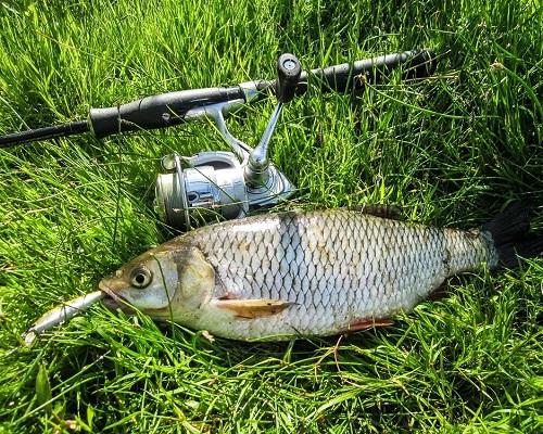 Рыбалка в июне: Какую рыбу ловить в июне, чем ловить в июне