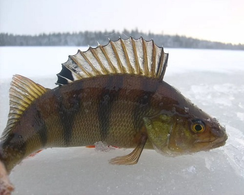 Рыбалка в конце осени