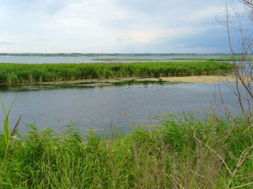 Шелюгино озеро