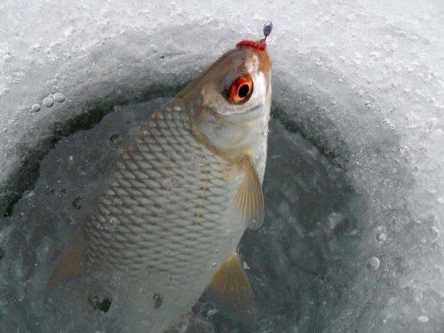 Ловля плотвы зимой на мормышку
