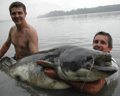 Ловля сома с берега: где ловить сома летом, наживки для ловли сома в июле и августе